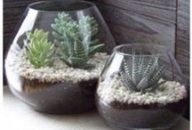 INSPIRED - Terrariums / Not only do terrariums make great focal points in a home, they are easy to make and care for! #Garden #Terrarium #DIY #Plants #Nature INSPIRATION BOARD for http://wp.me/p5zY54-qb.