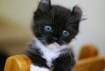 i like cats / cats