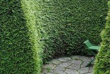 "боксет, ""зеленая комната"""