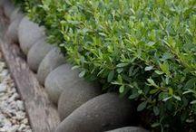 живая изгородь / hedgerow