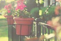 Nyár / Summer ♥