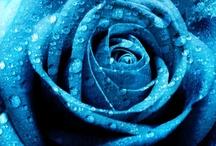 Színek-kék / Colors-blue