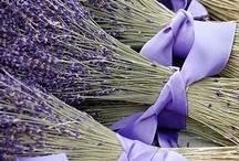 Színek-lila / Colors-purple