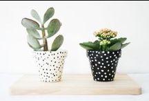 Plants // I n s p i r a t i o n