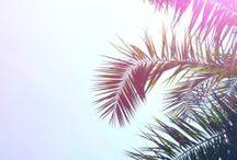 Tropical // I n s p i r a t i o n