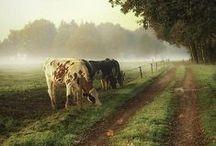 Élet vidéken ♥ Country life