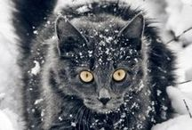 Cicák / Cats
