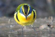 Birds / Birds make me wonder