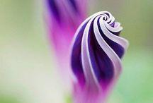 Spirals / Symbol of infinity