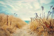 Love dunes, sand, shells and ocean