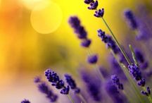 Complementary colors yellow purple / combinations of complementary colors are dynamic together, creating balance for the eye