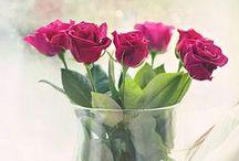 Roses, Love Roses