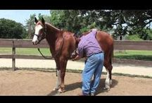 Equine Management / Looking after the horse