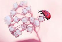 Ladybugs ♥