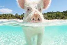 Tropical Travel Destinations / Our dream travel destinations.  Beach :: tropical :: island ::sunny ::paradise