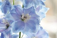 Flowers / Beautiful flowers from around the world