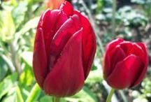 My garden - April 2014 / Pictures from my garden in NE England.