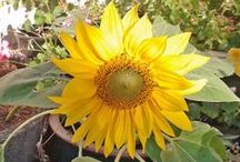 My garden - Sept 2013 / Title sums it up.