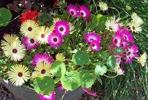 My garden July 15 / Best bits of July.