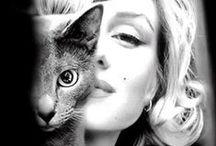 """Marilyn Monroe / """"Foi uma atriz e modelo norte-americana. Famosa por interpretar personagens conhecidos como """"loira burra"""", ela se tornou um dos sex symbols mais populares da década de 1950, época emblemática em relação às atitudes envolvendo sexualidade. Apesar de sua carreira ter durado apenas uma década, seus filmes arrecadaram mais de duzentos milhões de dólares até sua morte inesperada em 1962. Desde então, ela continua sendo considerada um grande ícone da cultura popular."""" - Wikipédia"""