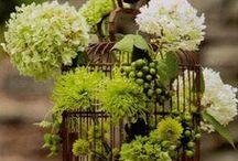 Gardening & Decor / by Alivia Sim