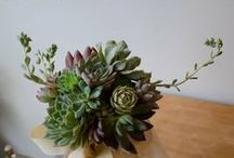 Details: Lovely Succulents / Succulent inspiration for weddings