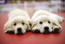 Puppies ✧