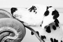 Dogs / A little joy to the world, a mans best friend, a ball of raging fur