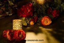 Nos photophores baroques / Jeux d'ombres et de lumières avec notre photophore baroque pour une ambiance lumineuse.