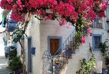 Bougainvilleas in Greece
