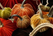Seasonal Decor / by Suze S.