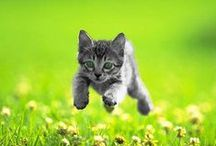 Feline / by Leroy Bovee