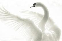 Palette - White
