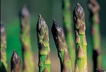 Planting Asparagus / by Vegetable Garden Guide