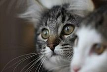 Pussy cat pussy cat