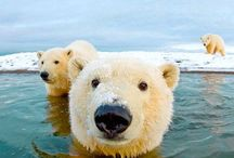 Animal Pics / Funny, cute etc