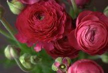 Il verde che mi ispira / Verde, rosa, rosso........ecc....