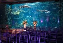 Weddings at the Aquarium /  Imagine exchanging your vows in front of your family, closest friends and over 2,000 Coral Reef fish and sea life in our breathtaking 500,000 gallon floor to ceiling Coral Reef exhibit! Or, make your reception an experience to remember among our 20,000 aquatic plants and animals from Florida and beyond with an aquarium wedding.   For more information on how to book an Aquarium wedding please call 813-273-4042