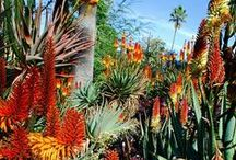 Home/Desert Gardening