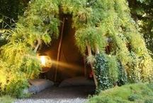 Garden oasis  / Things I plant