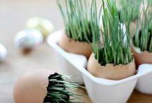 Eco Friendly Gardens / Eco-friendly gardening ideas and inspirations
