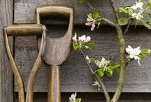 A Lot of Allotments / Allotments and allotment gardening ideas and inspirations