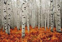 Metsämaisemia / Kauniita kuvia metsästä