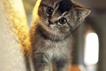 -Cutee♡-