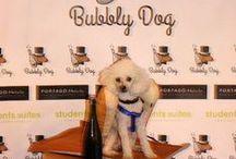 Inauguración Bubbly Dog / Fiesta de inauguración de temporada Bubbly Dog, terraza de Marquis Urban