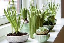 Green fingered / Potty about house plants