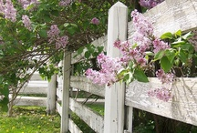 For the Garden/Porch... / by Tami Sauer