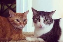 Caturday / Toys, treats & tips for cats and the people who love them. / by Petco