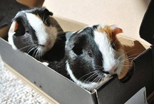 Small Critters / From hamsters to guinea pigs, everything about and for small animals!