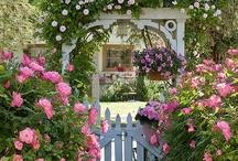 Gardening / by Rosalie Dotson